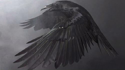 Во многих первобытных культурах азии, древней руси и америки, а также среди почитателей шаманства чёрный ворон всегда считался мистическим предвестником бед и невзгод, своего рода мифическим антагонистом, навлекающим несчастья и горести.