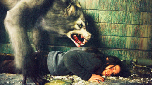 И большинство людей, наблюдавших в своём сновидении лесного хищника, несущего смертельную опасность, считает подобные сны дурным предзнаменованием.