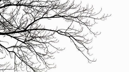Что означает увидеть во сне ветка, вы можете узнать в 12 сонниках на этой странице.