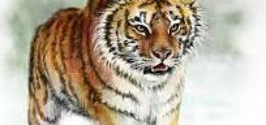 Пришли ко мне подружки я вышла на улицу и вдруг смотрю тигр со всех ног выбежал и убежал в даль.