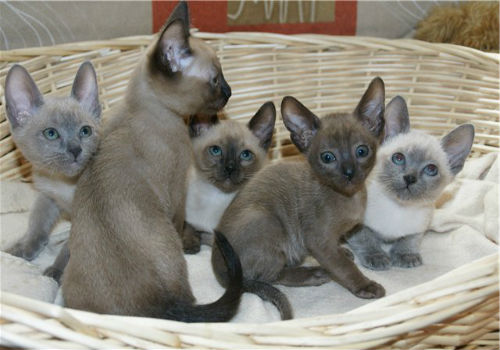 кошка с котятами 😫💤 Снится.ру | Самый полный сонник