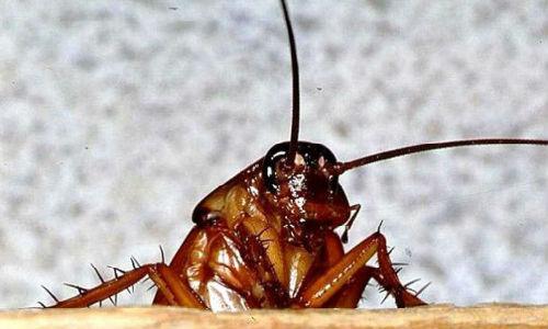 к чему снится давить тараканов